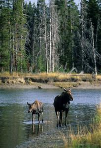 Moose-112