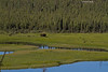 Moose Meadow.