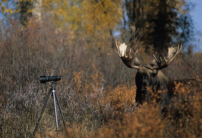 Moose-102