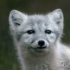 Cute Arctic Kit
