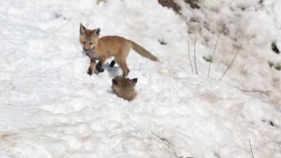 Kits Snow Play