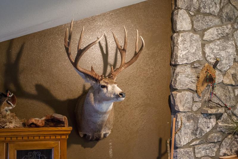 Ferry County Mule Deer Sheds