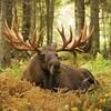 Hook the Moose