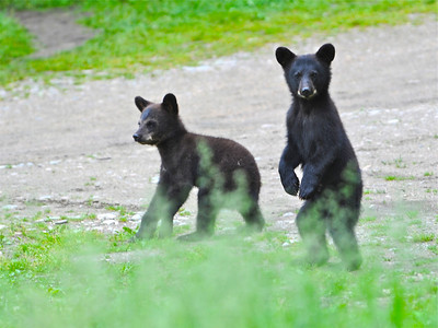 Bears of Vince Schute Bear Sanctuary