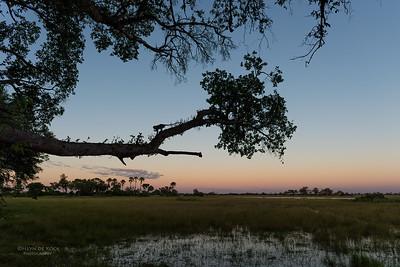 Vervet Monkey, Eagle Island, Okavango Delta, Botswana, May 2017-2