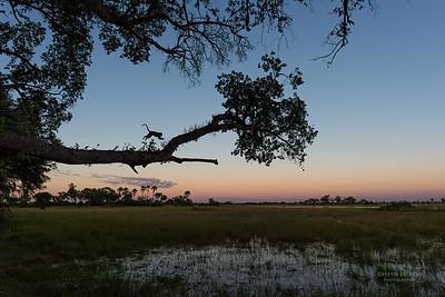 Vervet Monkey, Eagle Island, Okavango Delta, Botswana, May 2017-1