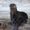 Otter Perplexity