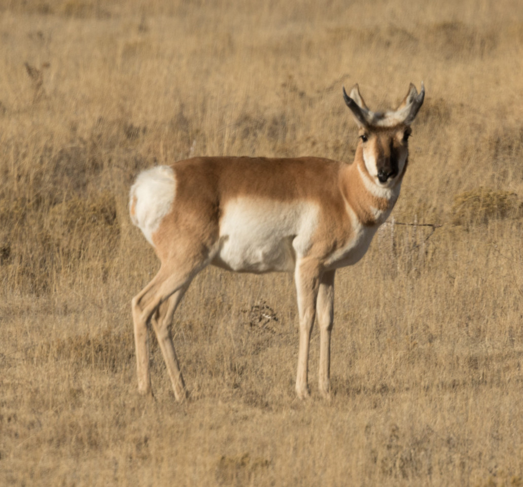 Pronghorn Colorado 2016 2016 11 29-1.CR2