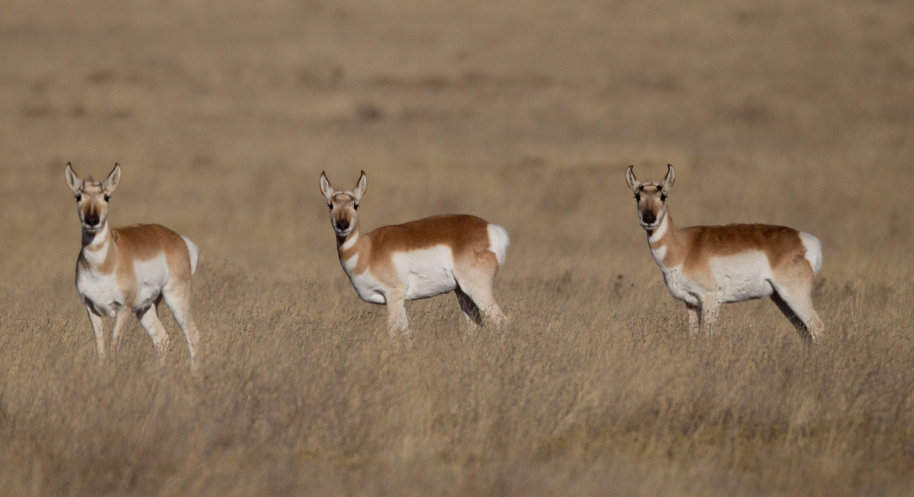 Pronghorn Colorado 2016 2016 11 29-3-2.CR2