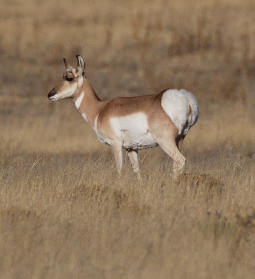 Pronghorn Colorado 2016 2016 11 29-4.CR2