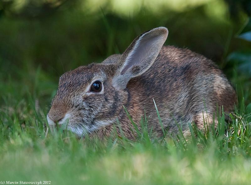 Rabbit under the shrub