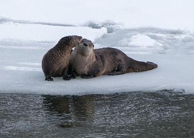 Wet Sloppy Kiss