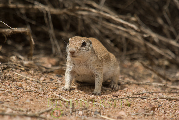 Biodiversity Group, _DSC6771