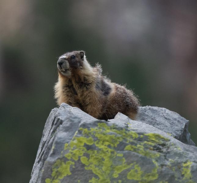 Marmot Mammoth Lakes 2018 07 26-1.CR2