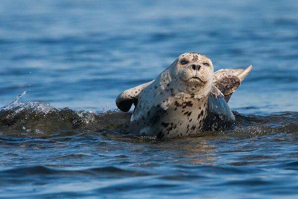 Sea Mammals