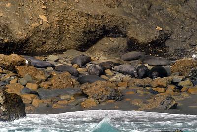Central Island, Los Coronados Isles, Baja California, Mexico 01/12/2008