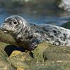Raising seal