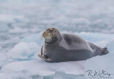 Polar Prey