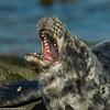 A yawn