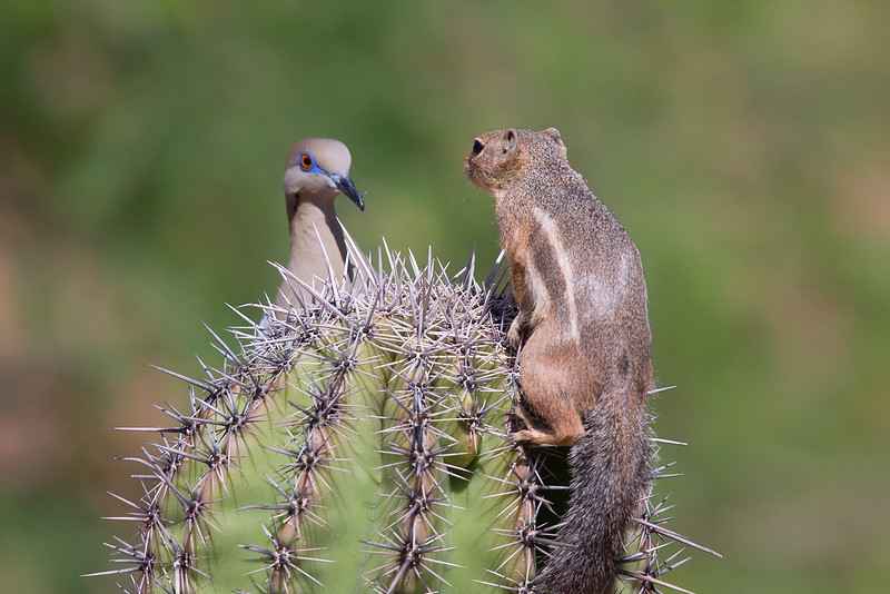 Fighting for top of cactus