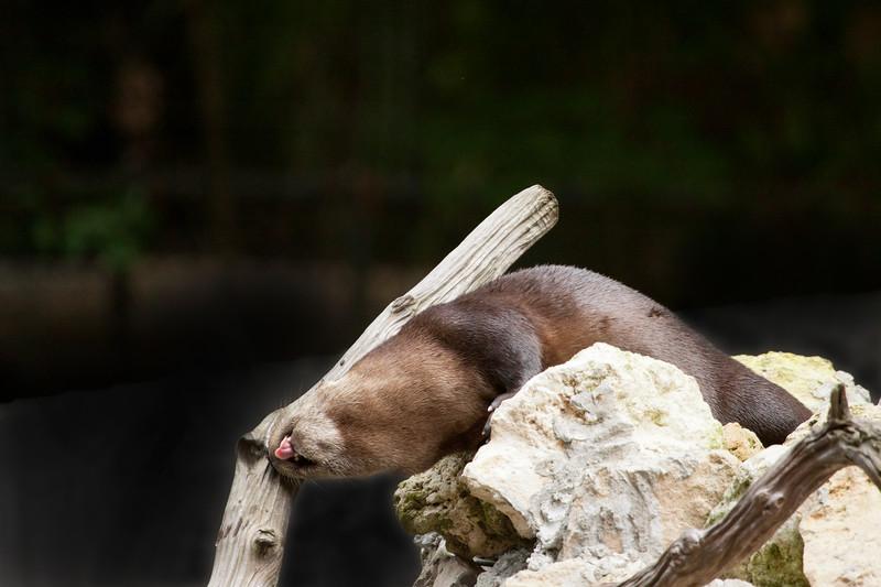 Otter_SS3907