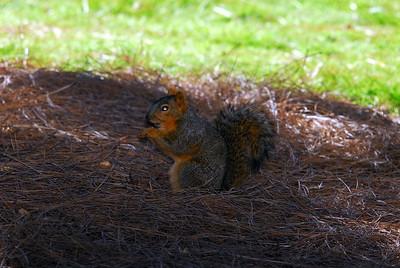 Presidio Park, Old Town, San Diego, CA 02/10/2008