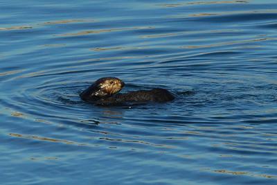 Monterey Bay, Monterey, CA 02/17/07