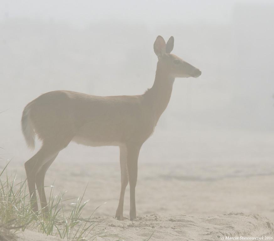 Misty profile
