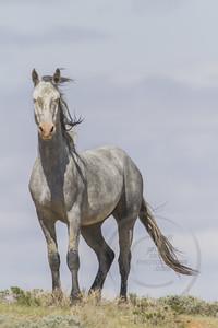 Wild Horse #4