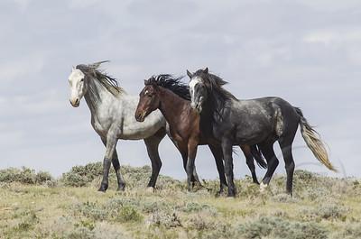 Wild Horses #3