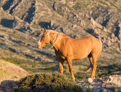 Stallion Stance