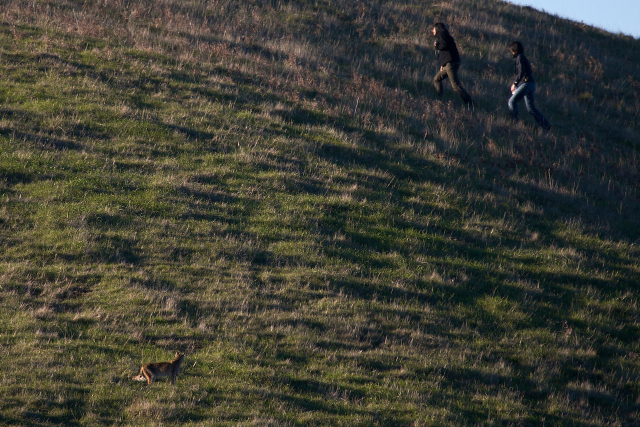 Hikers and bobcat (lower left)