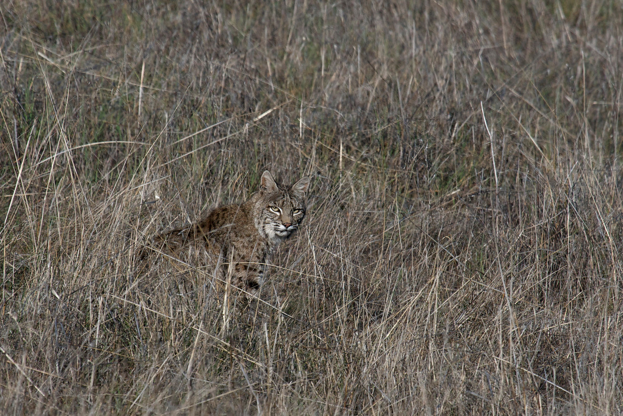 Bobcat, 01.11.09