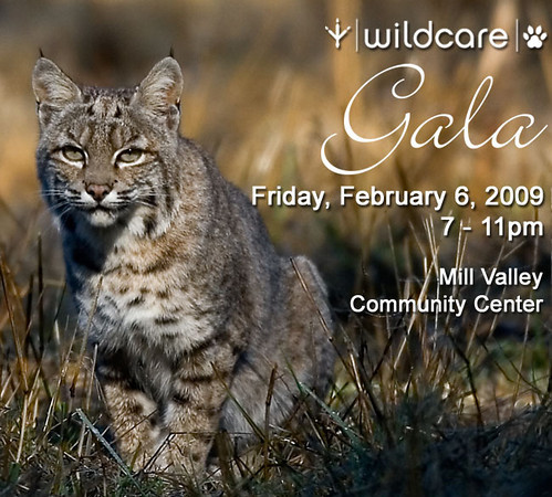 Wildcare Gala...come support Wildcare on Feb. 6, 2009!