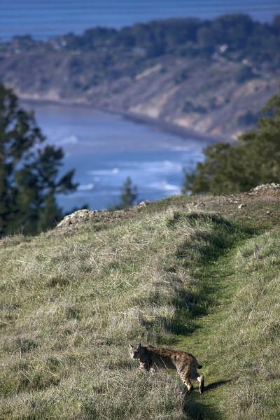 """""""Bobcat Ridge"""""""