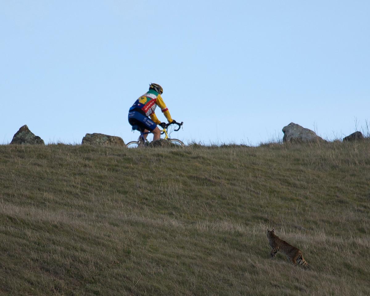 Bobcat and cyclist, Mt. Tamalpais, 12.29.08