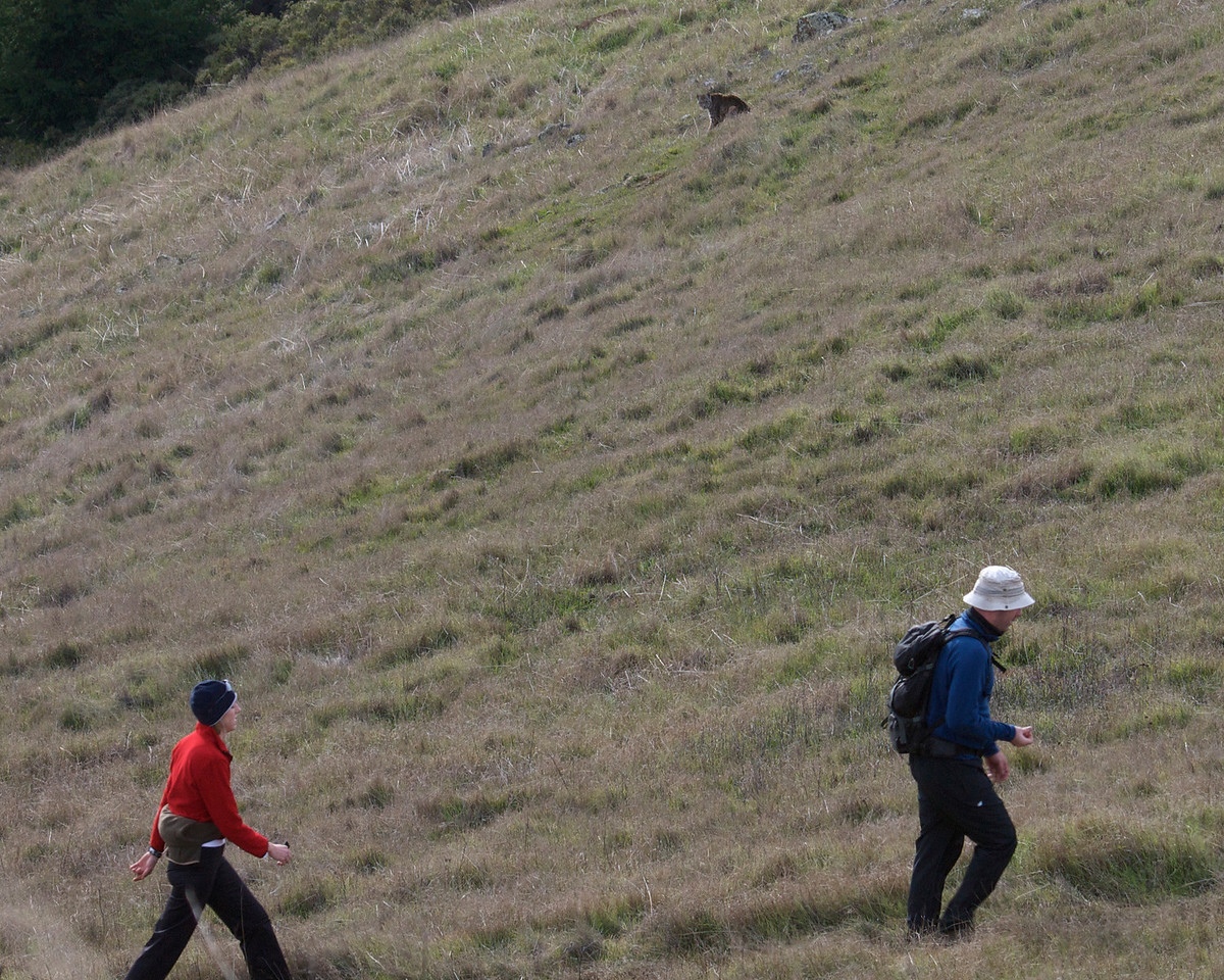 Hikers and Bobcat, Coastal trail, Mt. Tam, 01.04.09
