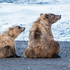 Mama with cub on beach