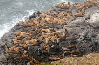 Napping sea lions.