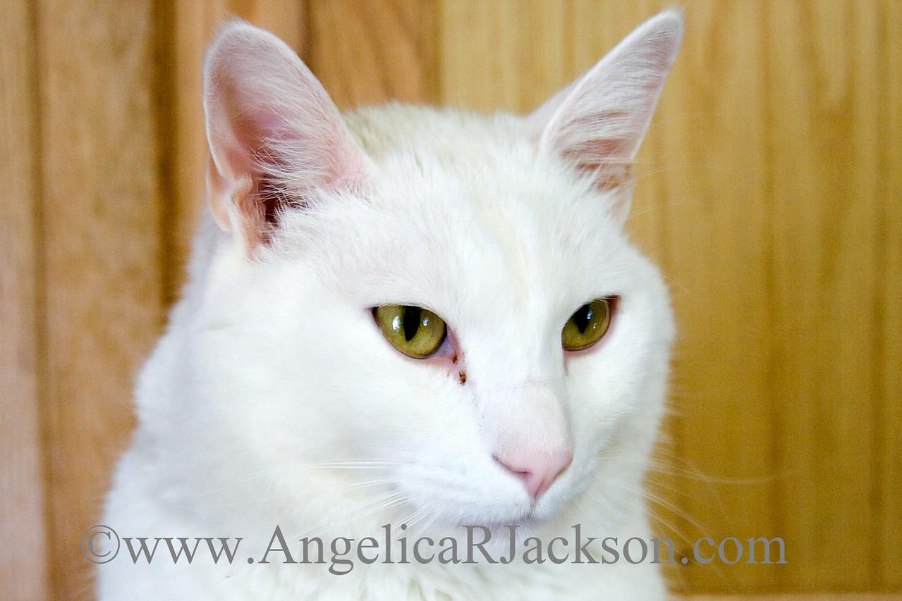 white_kitty_face