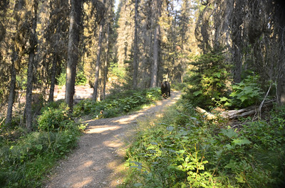 Black bear we encountered. The side trail on the left led to Reynolds Creek. The bear came forward and took that trail away from us with out incident.