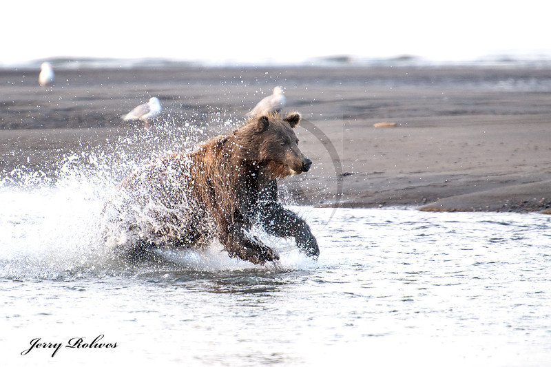 Mama Bear Fishing #4