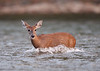 WL-122: Fawn Crossing River