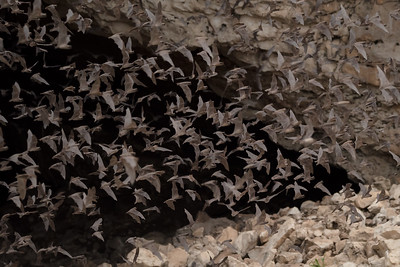 The Bat Colony Emerges