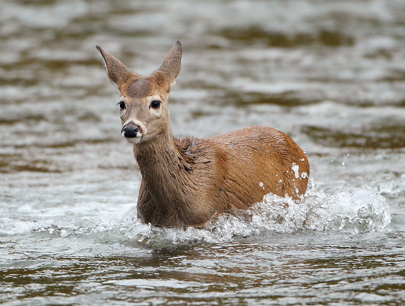 WL-131: Fawn Crossing River