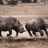 Black Rhino Battle
