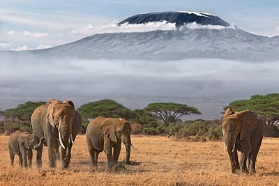 Amboseli, Kenya  &  Kilmanjaro, Tanzania