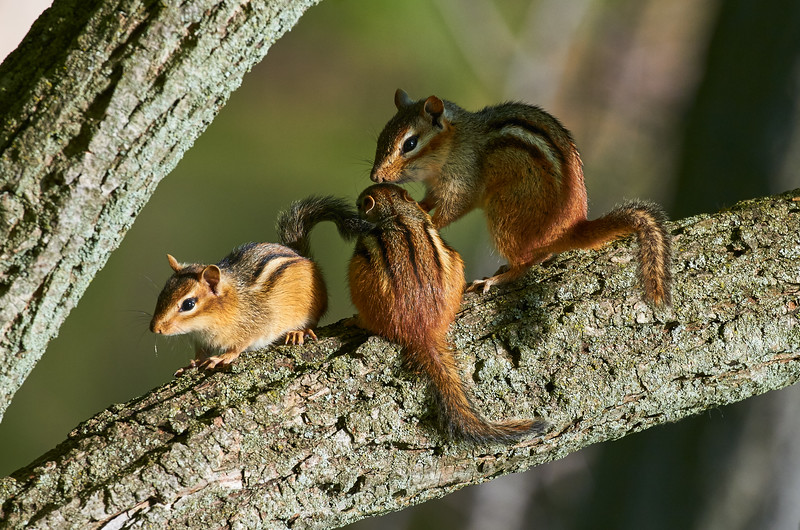 Mom and the kids/Chipmunk Family