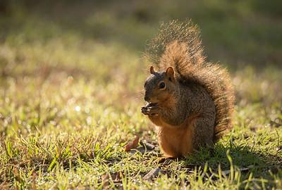 Morning Nut