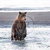 Mama Bear Fishing upright
